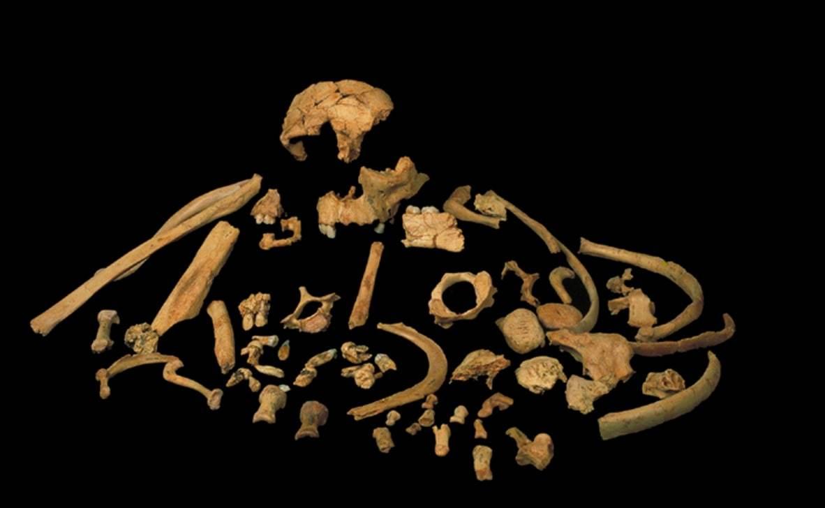The remains of Homo antecessor