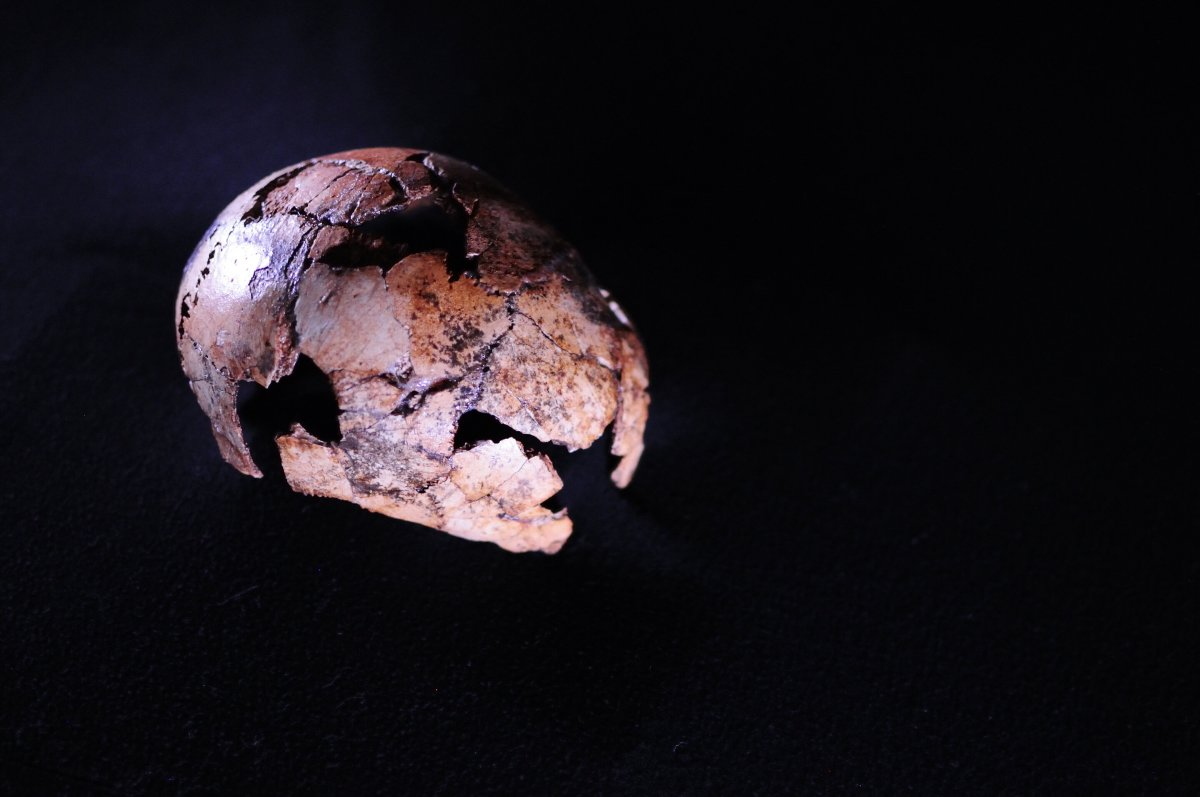 The Homo erectus skullcap DNH 134 is between 2.05 and 1.95 million years old, making it the oldest known fossil from the species