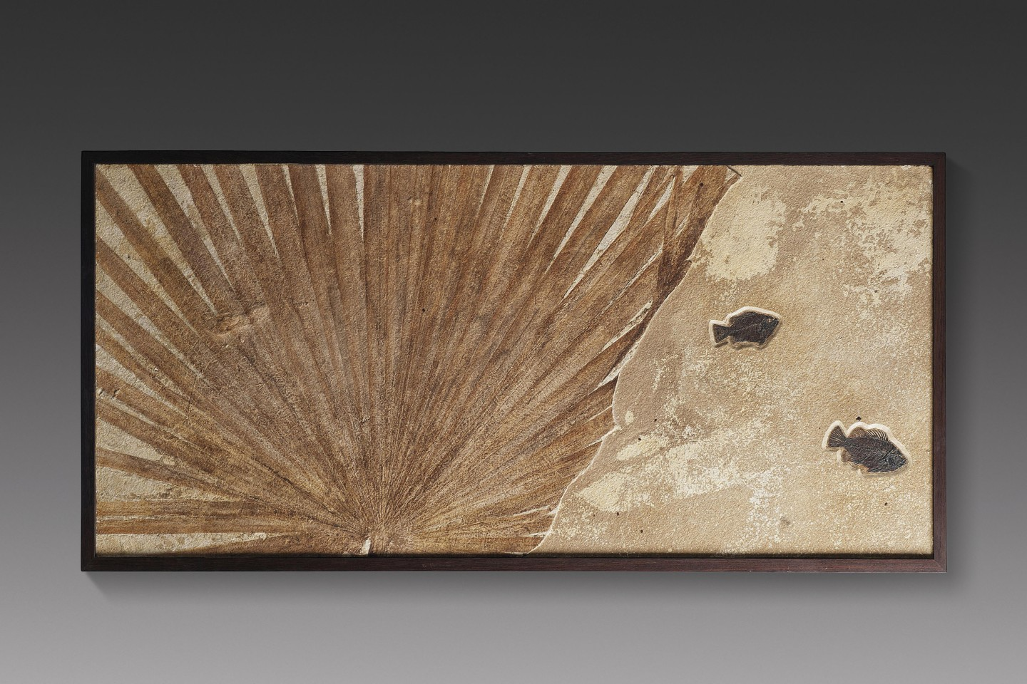 This 25½ x 52¼ inch (65 x 133 cm) wall hanging contains a 50 million-year-old fossil Sablites sp. palm leaf contrasted with two fossilised fish (a 5-inch and 4-inch Priscacara sp.) placed into a lower layer of the limestone block