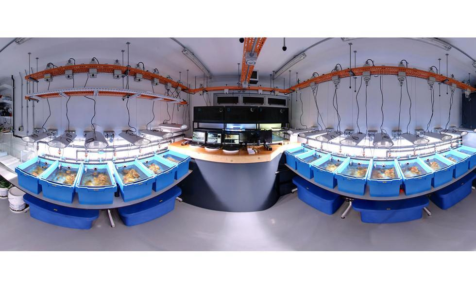 The Coral Reef Laboratory at the University of Southampton