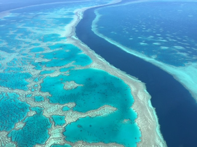 Australia's Great Barrier Reef has suffered repeated bleaching events in the last five years