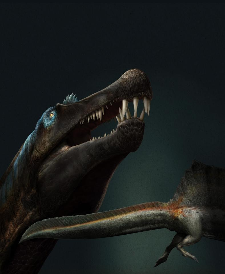 An artist's representation of the Spinosaurus, taking into account the newly discovered shape of its tail
