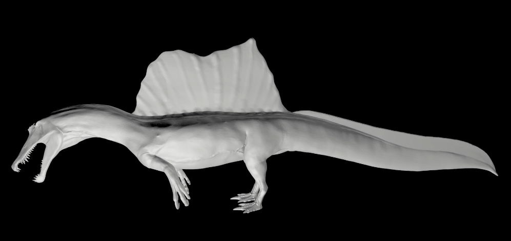 A render of the Spinosaurus, complete with the newly discovered paddle-shaped tail that indicates it was aquatic