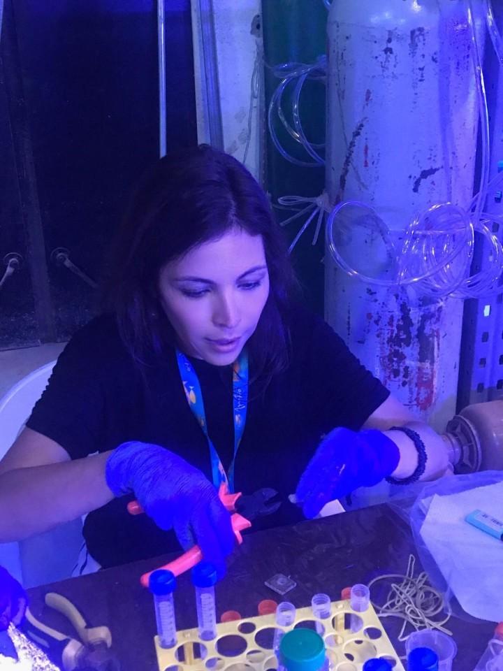 Federal University of Rio de Janeiro Professor Raquel Peixoto has been investigating how probiotics could give stressed corals a health boost