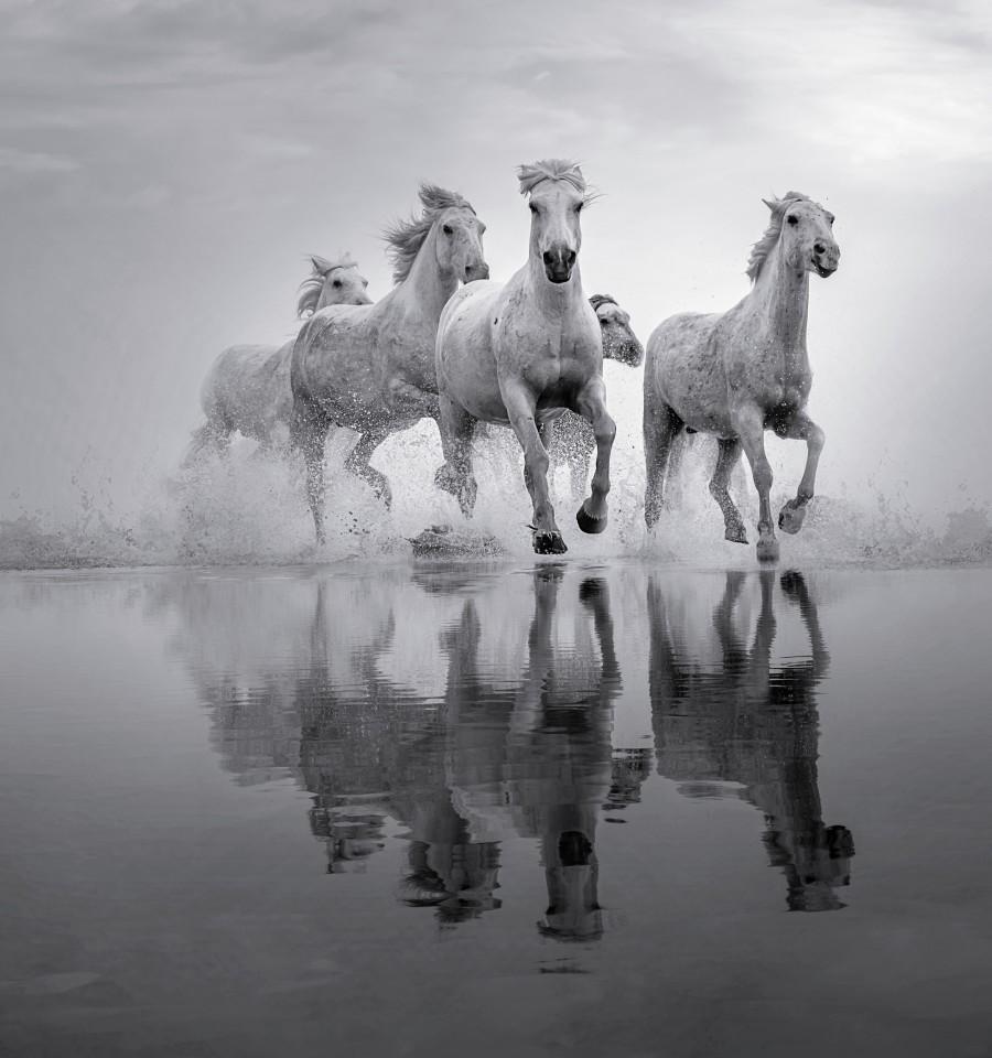 Saltmarsh Gallop