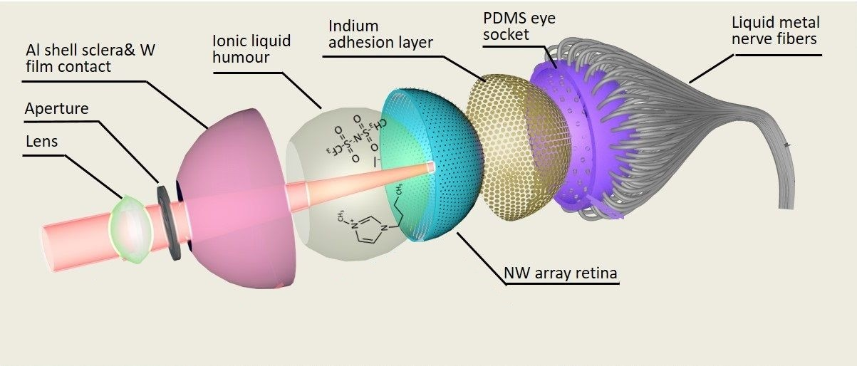 A cross section of the makeup of the Electrochemical Eye (EC-Eye)
