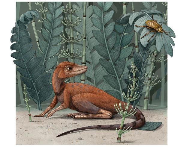 Kongonaphon kely in what would have been its natural environment about 237 million years ago