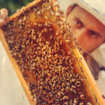 Read more about the article How SAS uses IoT and analytics to help save honey bees, the world's No. 1 food crop pollinator
