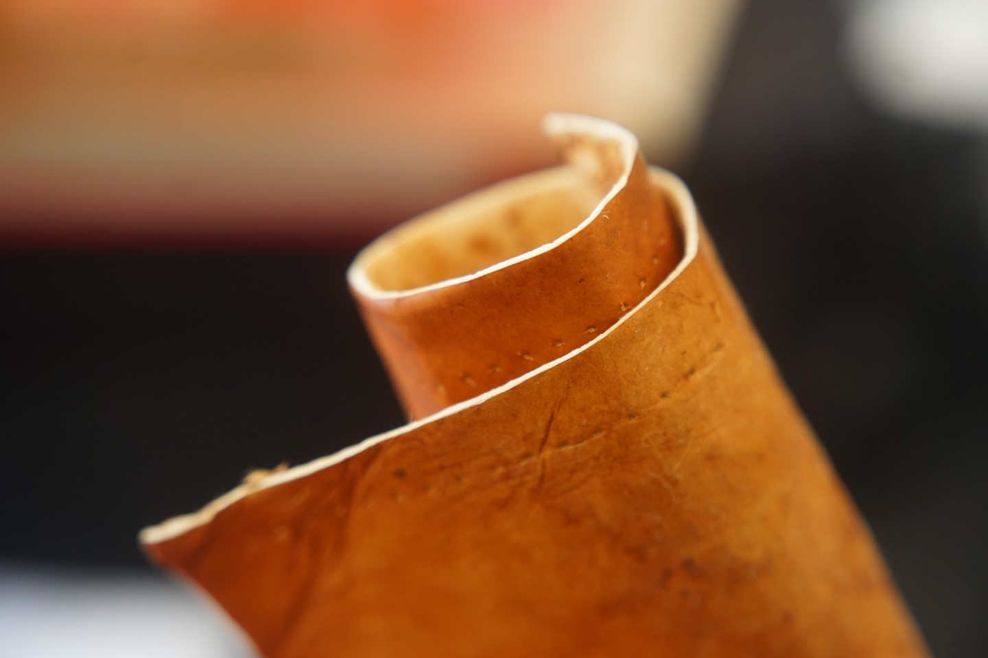 """A closer look at """"mushroom leather"""""""