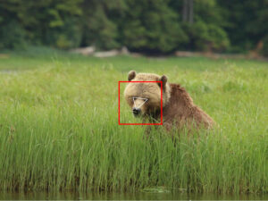 Deep-learning, facial recognition, and bears: Researchers take a high-tech approach to wildlife monitoring