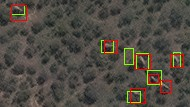 A satellite image with elephants detected by a computer algorithm shown in a green rectangle and those verified by humans in red