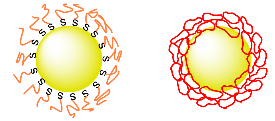 Illustration of conventional linear PEG-coated gold nanparticles (left) and cyclic PEG (right)