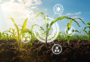 How AI innovation is improving agricultural efficiency